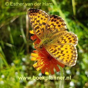 natuurfoto vlinder